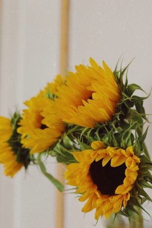 ©Katiewrites.co.uk Life Lessons, Katie Writes, Blog, Sunflowers, Summer, Derbyshire, Bloggers, Beauty Blogs, Lifestyle Blogs, Wisdom, Flowers, Northern, East Midlands, Bloggers,