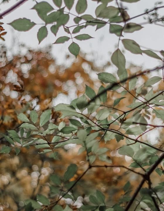 5 Reasons I'm Falling For Autumn