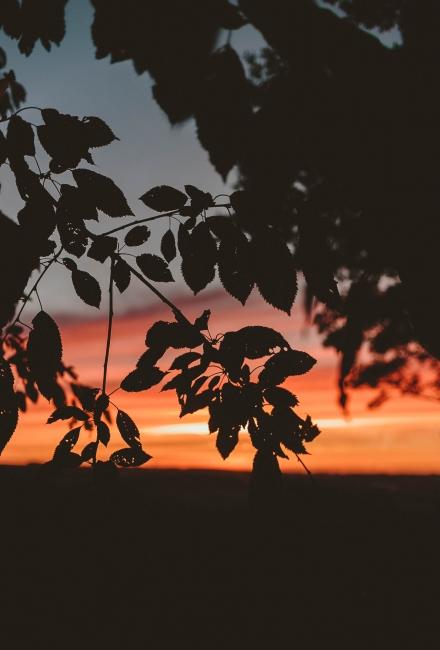 Photo Diary: A Frosty Autumnal Sunrise