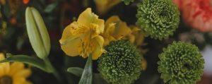 ©Katiewrites.co.uk, katiebwrites, katie writes, flowers,