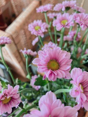 Flowers, Sweet Williams, Katie Writes, Picks of the Week,