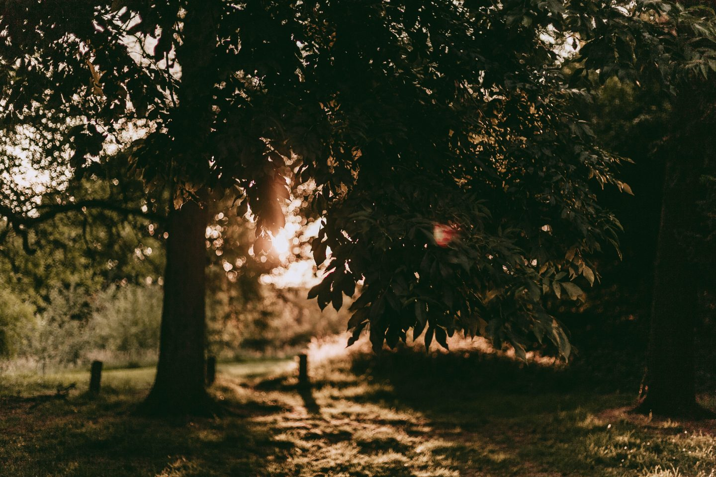 Allestree Park, Golden Hour, Derbyshire, Photography, Photographer, Katie Writes Blog, Bloggers, Blogger, katiebwrites,