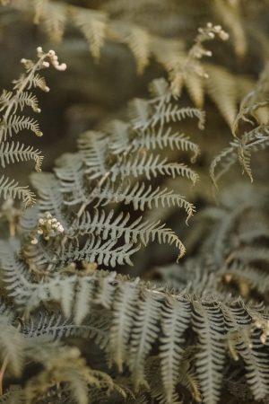 Ferns, Derbyshire, Countryside, Rural, Plants, Little Eaton, Canon 85mm 1.8, Katiebwrites, Katie Writes, Bloggers,