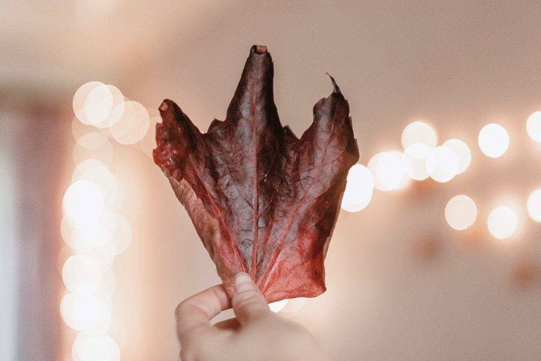 katiewrites, katiewrites.co.uk, katiebwrites, katie writes blog, leaf, lights, autumn, fall, derbyshire, bloggers,